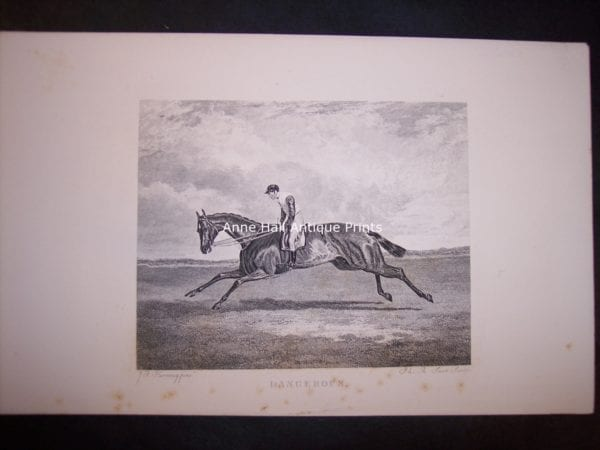 Horses Equine Horse Engraving 9764