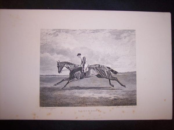 Horses Equine Horse Engraving 9764