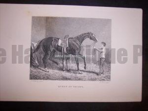 Horses Equine Horse Engraving 9765