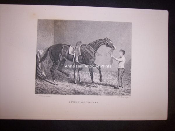 Horses Equine Horse Engraving 9765
