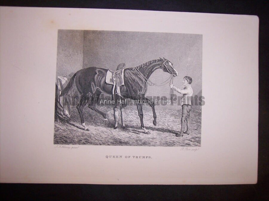 small antique engraving of race horse with groom