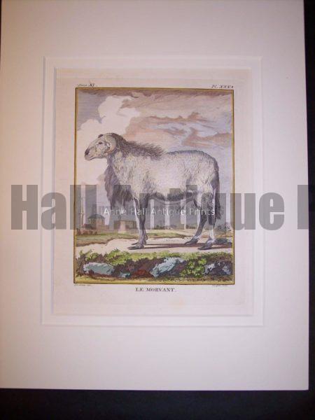Goats & Sheep by Buffon 1749-1761  9786