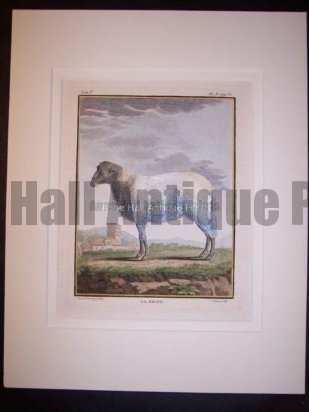Goats & Sheep by Buffon 1749-1761   9787
