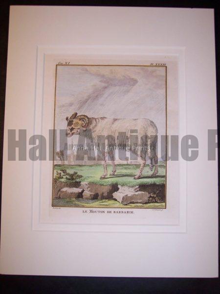 Goats & Sheep by Buffon 1749-1761 9788