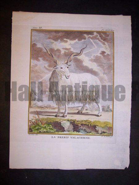 Antique engraving with lightening bolt and Goats & Sheep by Buffon 1749-1761   9791