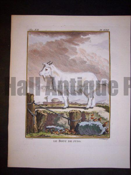 Goats & Sheep by Buffon 9794