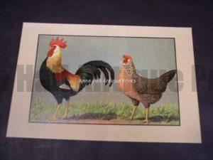 Kramer Poultry Chromolithograph
