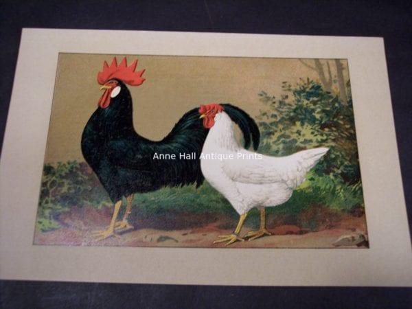 Kramer Poultry Chromolithograph 17