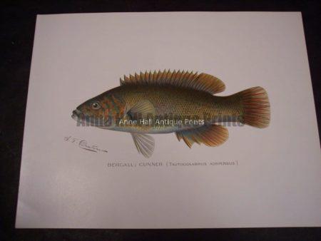 Denton Fish Print Bergall