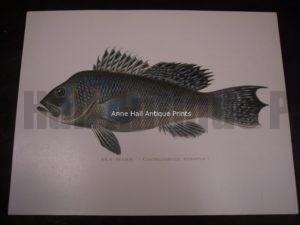 Denton Fish Print
