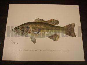 Denton Large Mouthed Black Bass