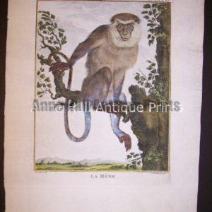 George Buffon Monkey Engraving La Mone