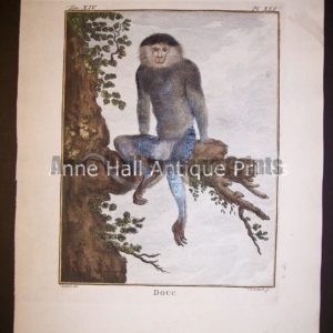 George Buffon Monkey Engraving XLI Douc