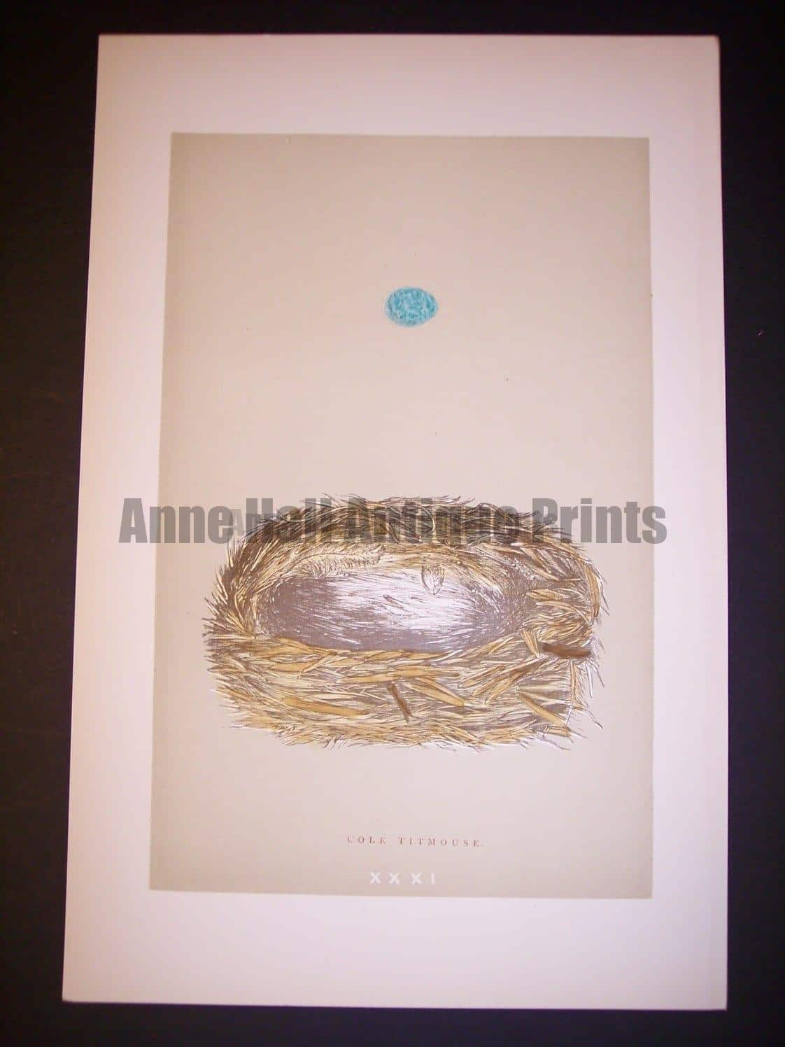 Reverend Morris Birds Nest Print  from 1890  #9956 Click here to buy now.