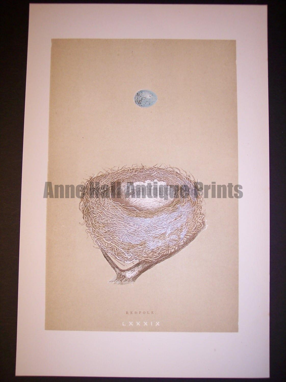 Reverend Morris Birds Nest Print  from 1890  #9963 Click Here to buy now.