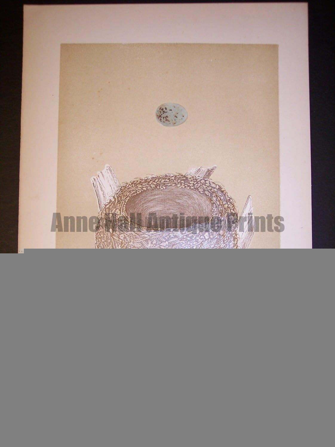Reverend Morris Birds Nest Print  from 1890  #9964 Click here to buy now.