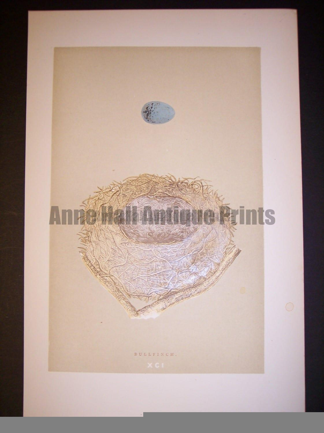 Reverend Morris Birds Nest Print  from 1890  #9965 Click here to buy now.