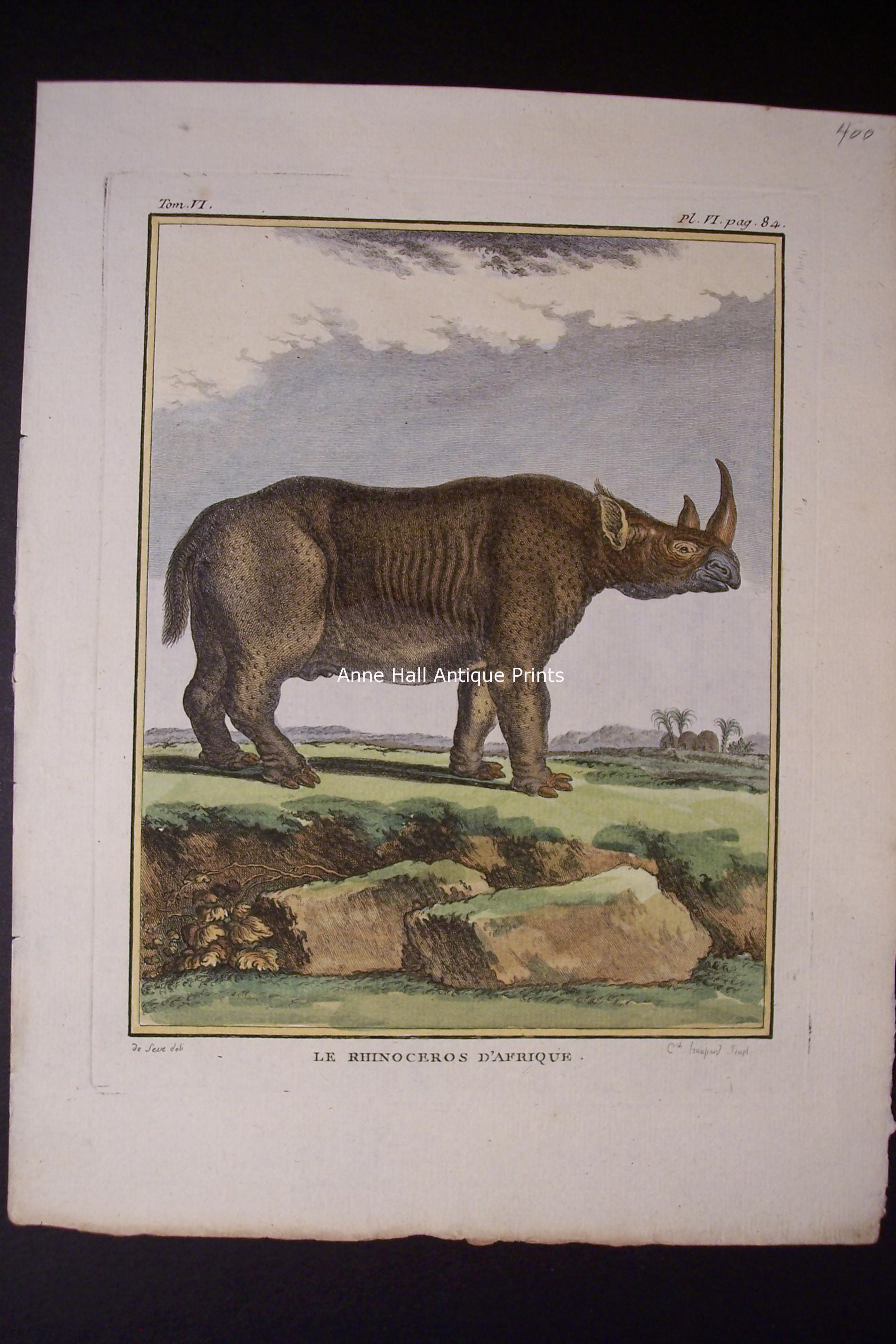 Buffon Rhinoceros