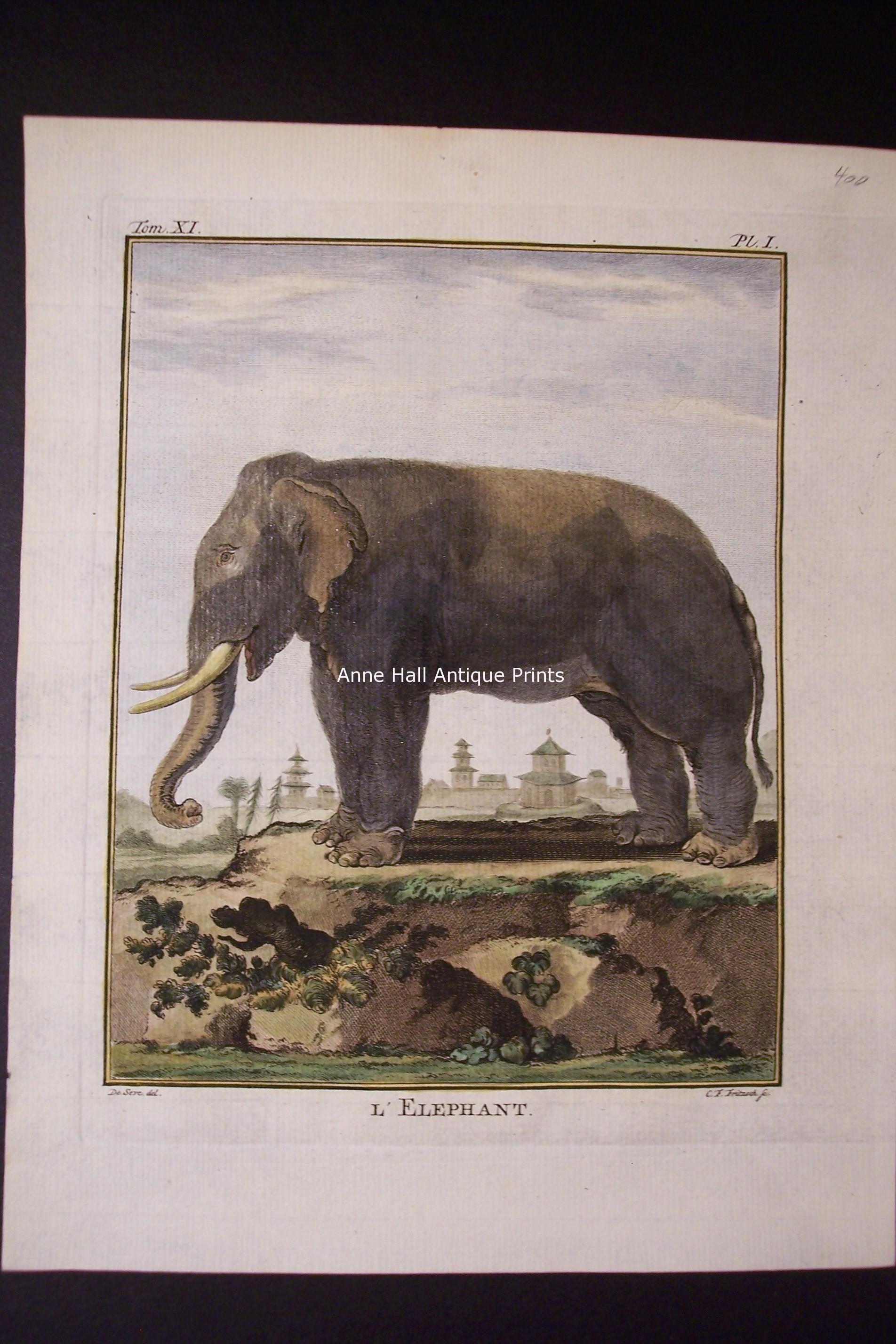 Buffon Elephant 1st
