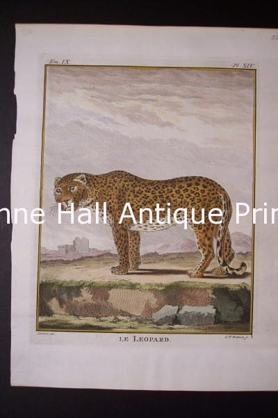 Buffon Leopard