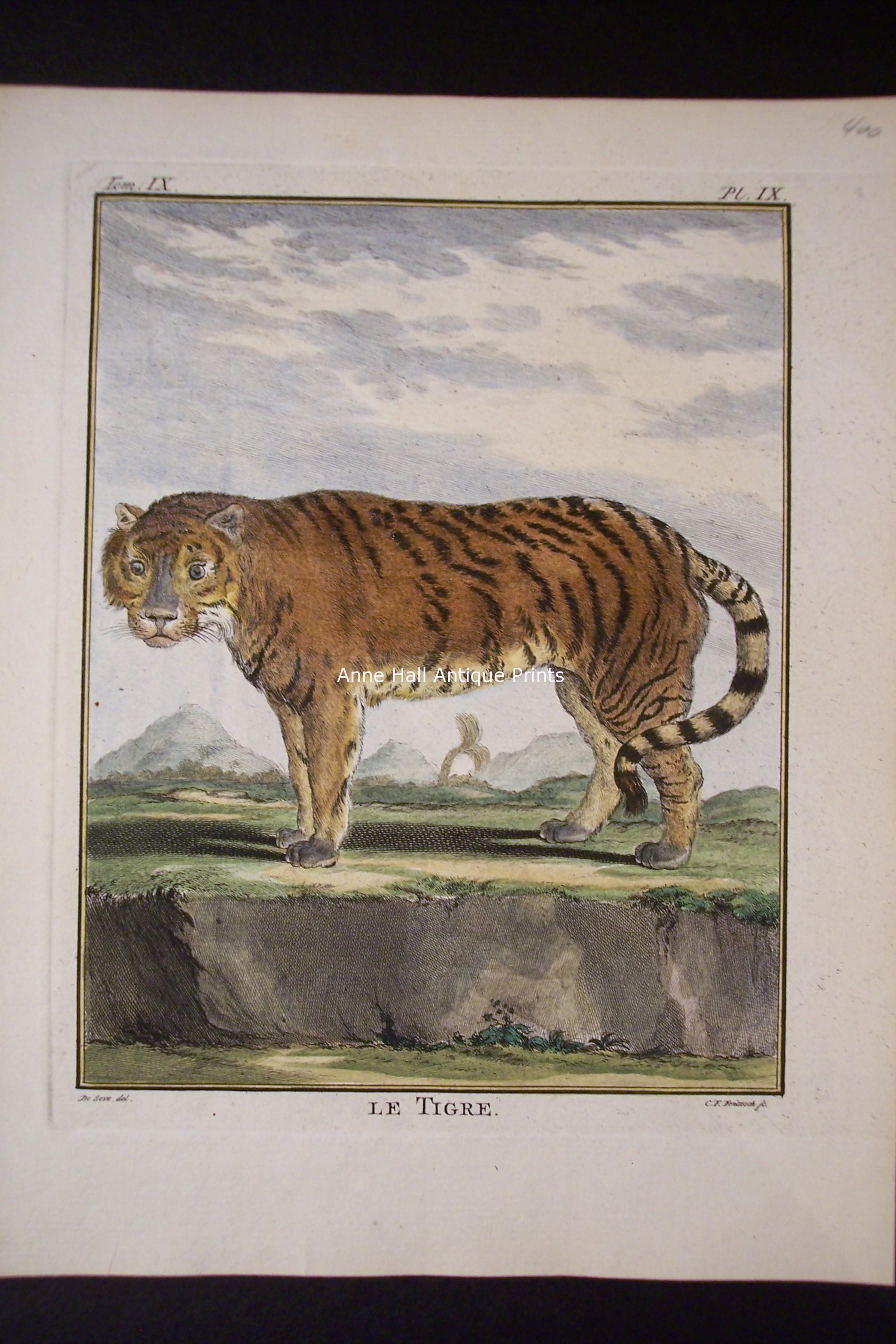 Buffon Tiger