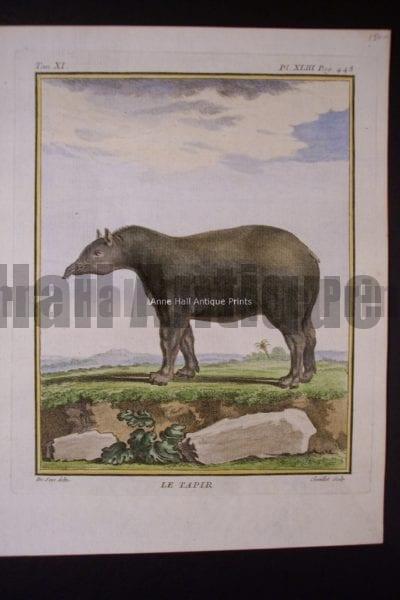 Buffon Tapir