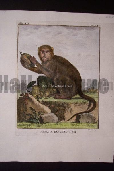 Buffon Monkey 0150