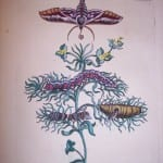Maria Sybilla Merian Insects of Europe  Pl.  CXXIII  350.