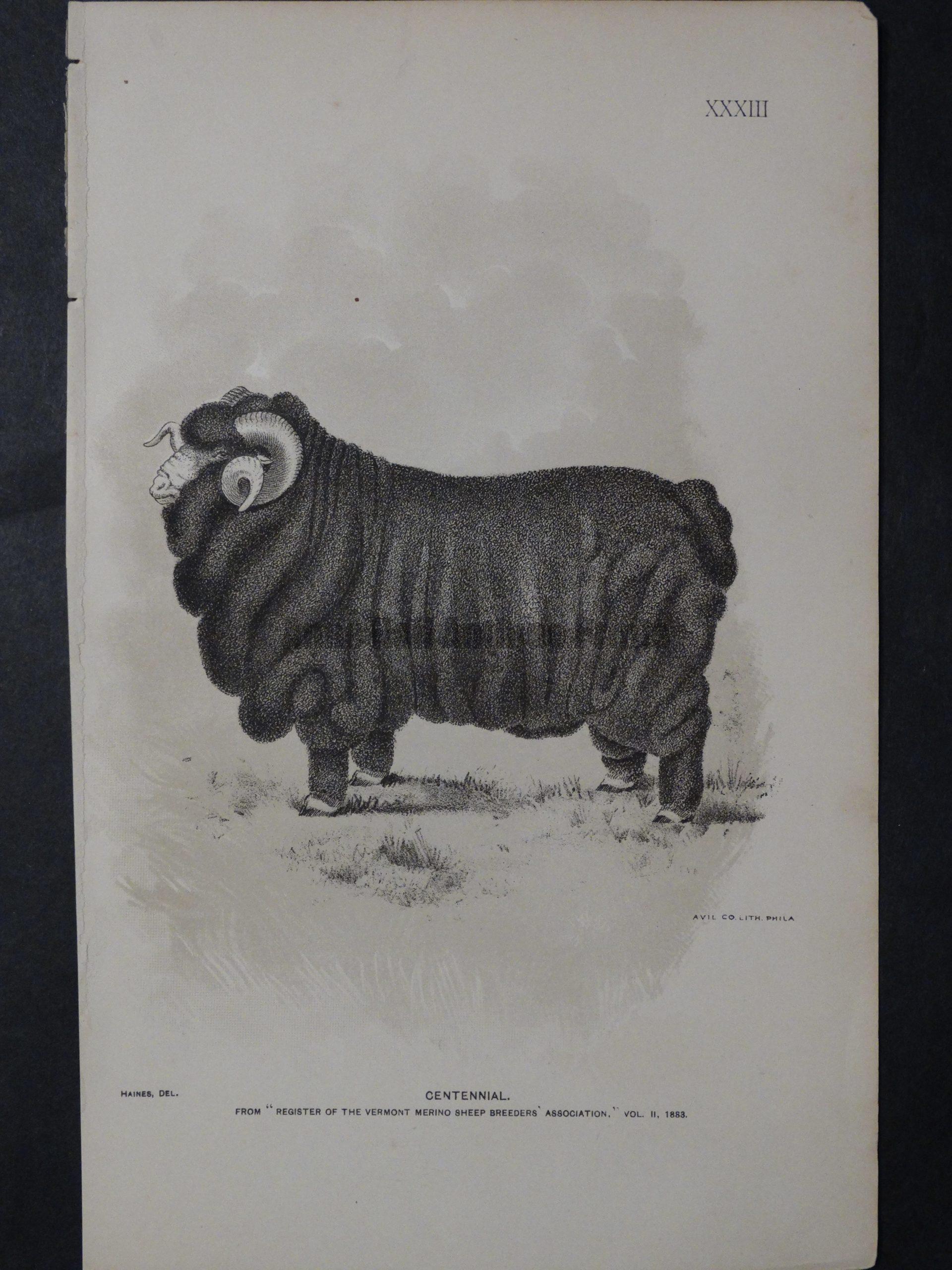 1888 Sheep Print, Old American lithograph(10)