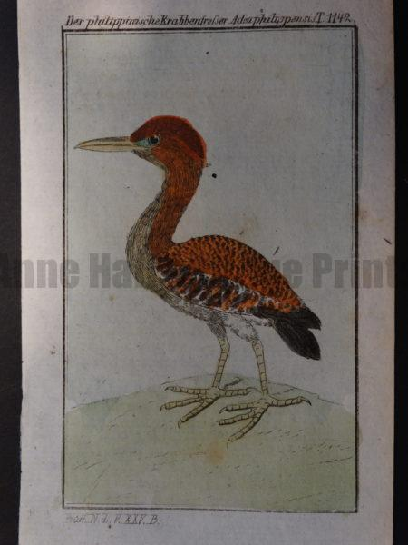 miniature c.1800 Compte de Buffon shore bird engraving
