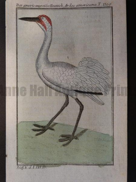 miniature crane heron bird engravings