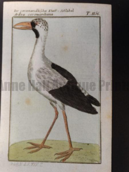 an old world bird genus of Ardea or great herons