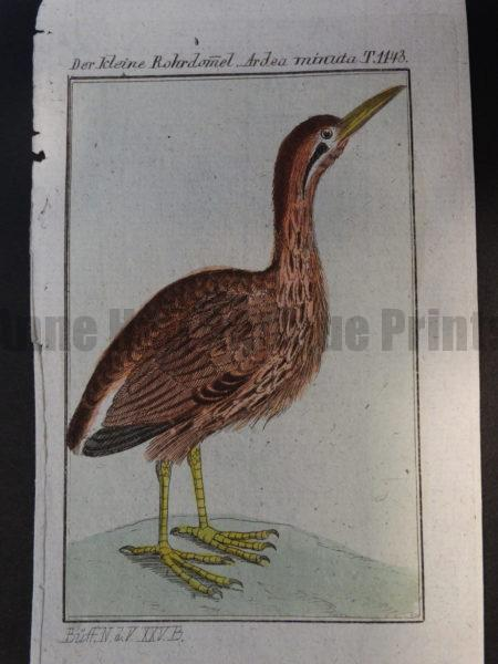 miniature antique engraving of bittern shore bird