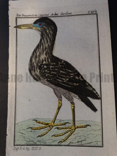small grey heron miniature engraving