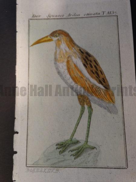 Ardeola ralloides or pond heron