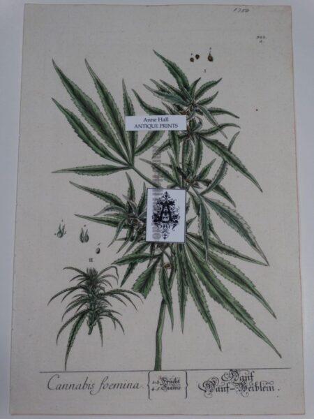 Feminine Marijuana Antique Pot Engraving