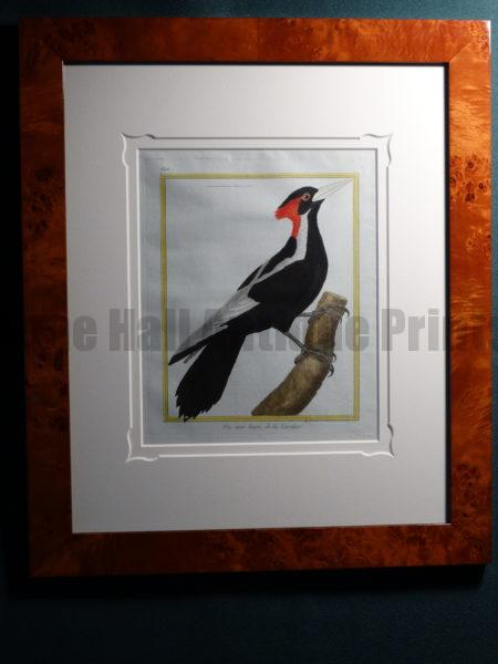 Extraordinary set of framed 18th century hand-colored engravings of Woodpeckers by Martinet.