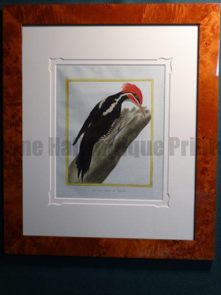 rare antique prints from the 18th century, framed set of woodpecker engravings.