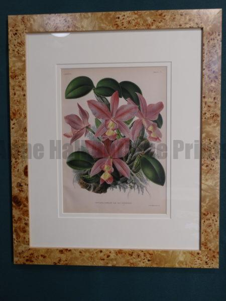 orchid lithograph ready to hang