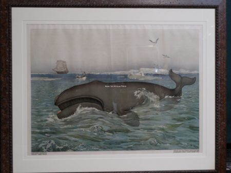 framed old whale lithograph