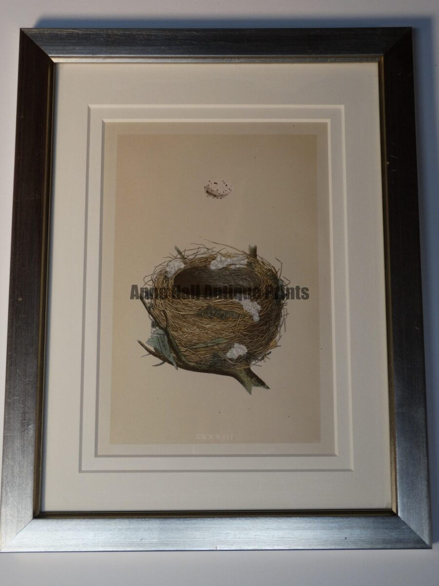 old nest litho modern frame