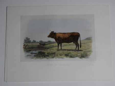 Wonderful 19th century Bavarian cattle lithograph.