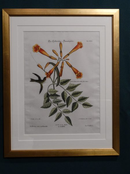 Framed in smooth gold leaf, hummingbirds with trumpet flower, Cateby Seligmann engraving.