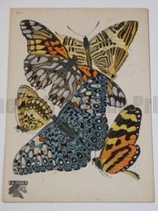 stenciled pochoir butterflies