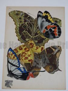 Emile Allain Seguy Papillons 15