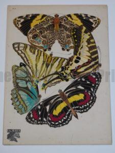 Amazing Stenciled Butterflies