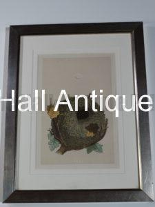 Antique Nest Lithograph Silver Frame