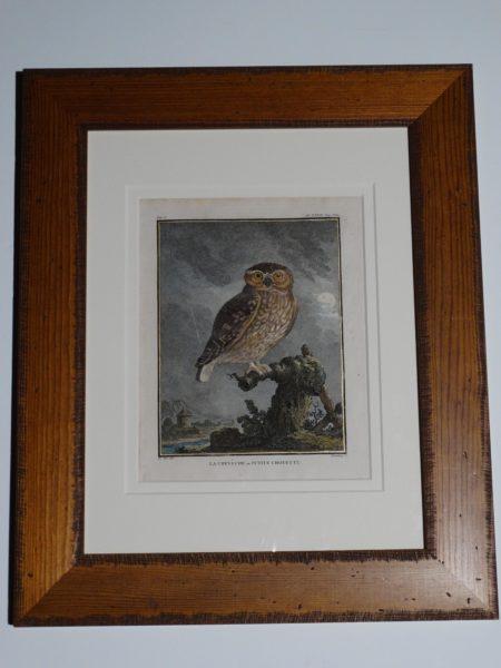 Antique owls engraving souced from Compte de Buffon's Histoire Naturelle