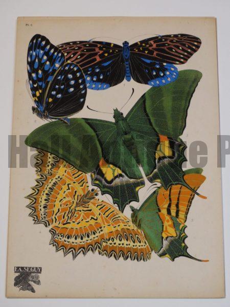 parisian art deco butterflies
