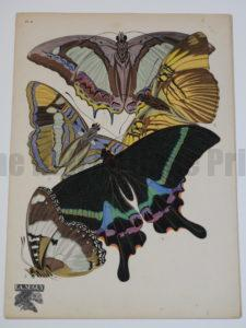 Seguy Insectes Papillons Plate8